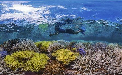Ein Schnorchler mit Kamera schwimmt über einem bunten Korallenriff