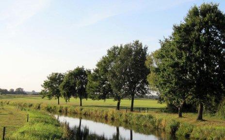grüne Wiese mit Bäumen und Fluss