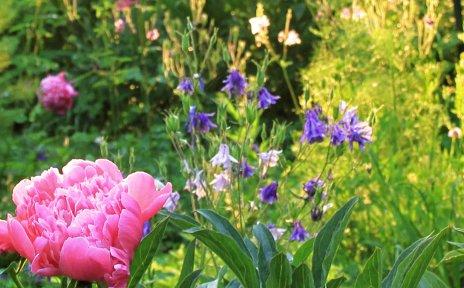 """Ein grüner Garten mit rosa und lila Blumen mit der Aufschrift """"Bremer Woche des Gartens"""" 16.-23. Juni 2019."""