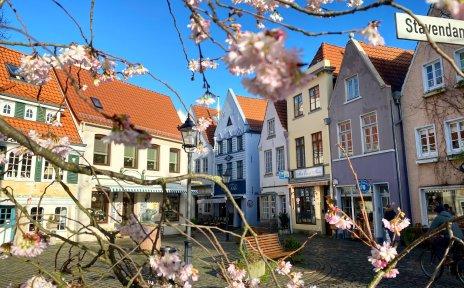 Blüten im Vorfrühling vor dem sonnigen Stavendamm im Bremer Altstadtviertel Schnoor