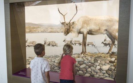 """Ferienprogramm """"Tiere wandern durch die Stadt"""": Zwei Kinder stehen vor einem Schaukasten, hinter dem sich ein präparierter Hirsch befindet."""