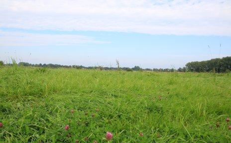 Blick auf eine grüne Wiese in Horn-Lehe