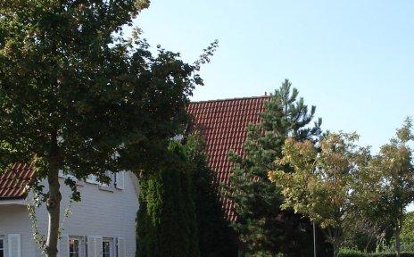 Hausdächer, im Vordergrund Bäume; Quelle: Ortsamt Seehausen