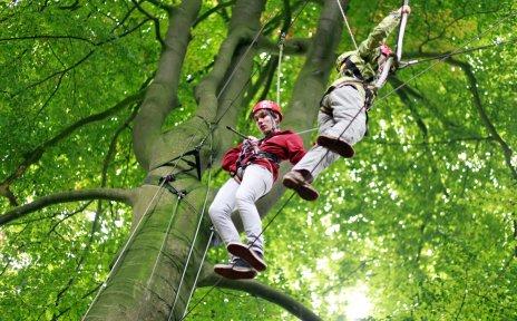 Zwei Menschen mit Kletterausrüstung im Baumwipfel