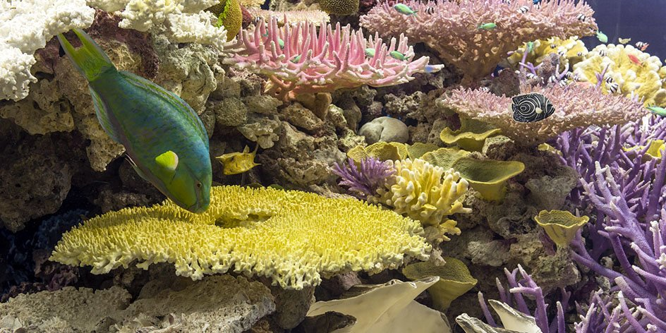 VERSCHOBEN: Korallenriffe - vielfältig. verletzlich. verloren?