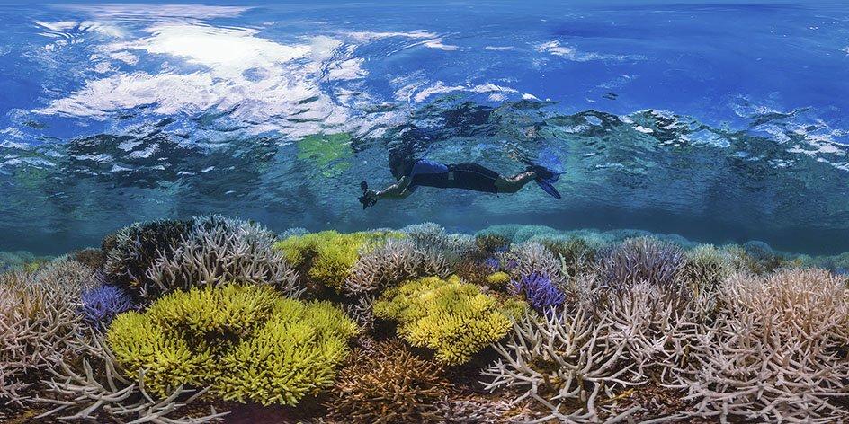 VERSCHOBEN: Bunte Vielfalt, weißer Tod – Was uns Farben über Korallenriffe verraten