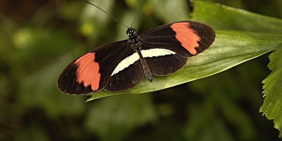Im Reich der tropischen Schmetterlinge