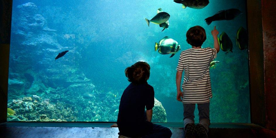 ABGESAGT: Bunte Unterwasserwelt