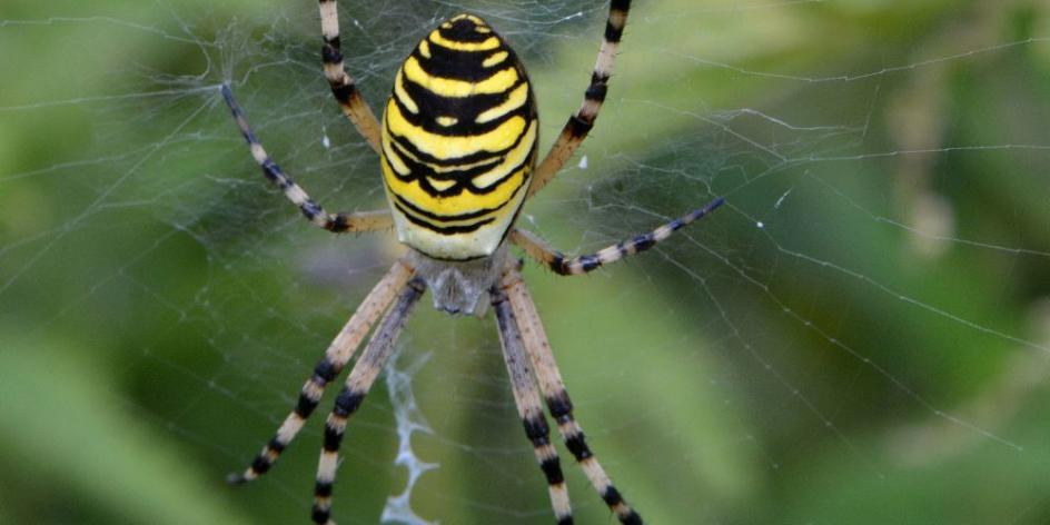 Leben am seidenen Faden - Spannende Spinnen