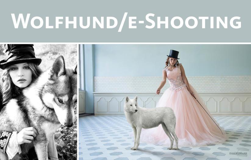 Angebot: Wolfshund/e-Foto-Shooting