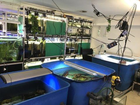 Mehrere Aquarien mit Pflanzen und Schildkröten