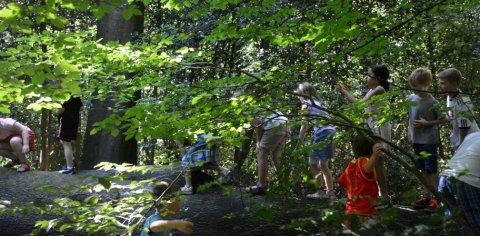 Eine Schulgruppe klettert über einen umgefallenen Baumstamm im Wald