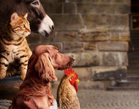 Esel, Hund, Katze und Hahn.