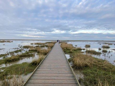 Ein Steg führt durch das Wattenmeer. Es laufen mehrere Personen darauf. An den Seiten wachsen Gräser.