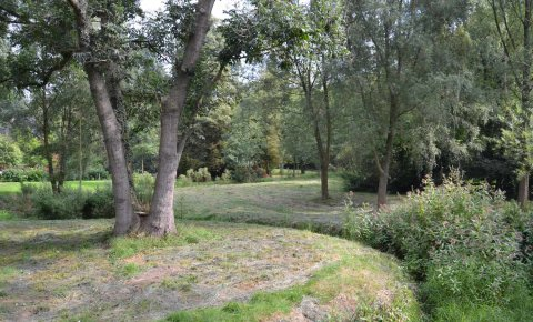 Einige Bäume und Rasen.