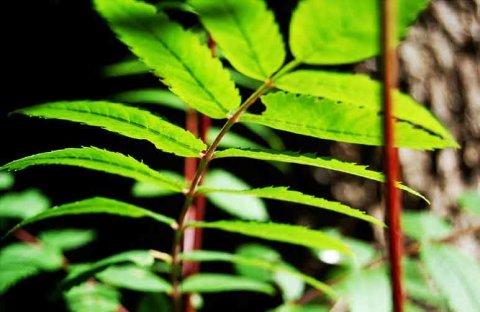 grünes Baumblatt in Großaufnahme