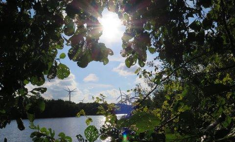 Ein Foto durch die Blätter eines Baumes auf den See.