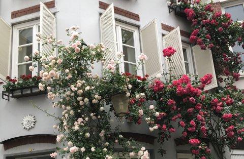Ein mit Rosen bepflanztes Haus im Schnoorviertel