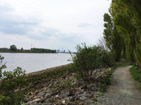 Ein von Bäumen gesäumter Weg auf der Werftinsel mit Blick auf die Weser