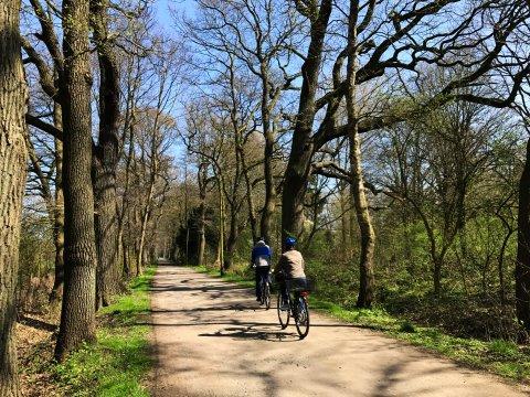 Radfahrer auf einem von hohen Bäumen gesäumten Weg im Achterdiekpark