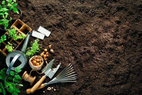 Auf aufgewühlter erde liegen ein Spaten, eine Harke und eine Gießkanne. Drum herum stehen einzelne Grünpflanzen in Töpfen.
