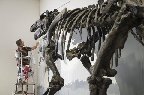 Aufbau eines Dino-Skeletts