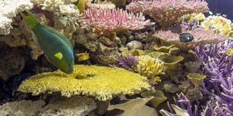 Ein buntes Korallenriff mit Fischen