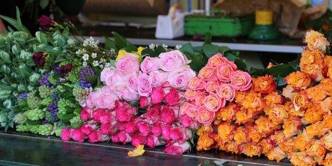 bunte Blumen auf dem Findorffmarkt