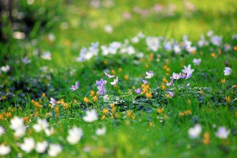 Eine saftig grüne Wiese mit Blumen