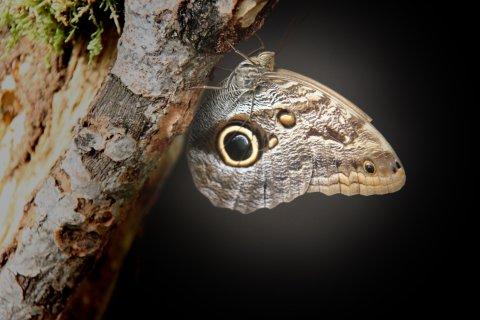 Ein Schmetterling, der angeleuchtet wird