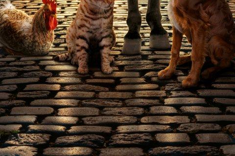 Die Hufe eines Esels, die Pfoten eines Hundes und einer Katze, sowie die Krallen eines Hahns auf typisch bremischen Pflasterstein.
