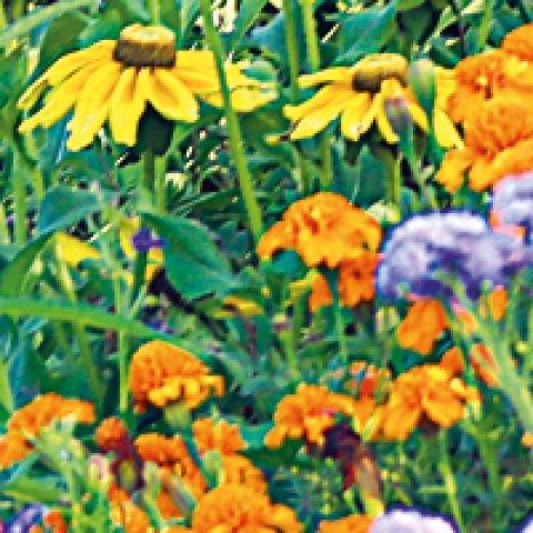 Eine bunte Blumenwiese / Foto: Kassandra Ruhm.