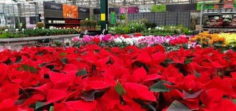 Rote und pinke Blumen stehen auf einem Tisch. Im Hintergrund sind noch mehr Pflanzen zu sehen.