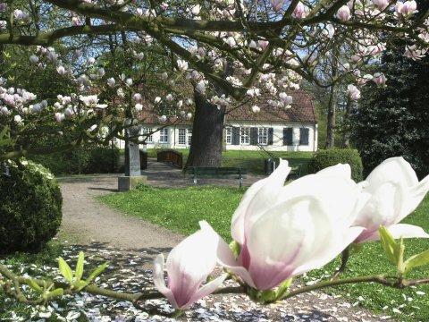 Magnolienblüte im Riensbergpark mit Blick auf das Haus Riensberg.