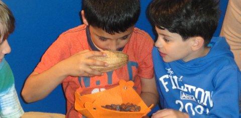 Drei Schüler riechen an einer Kakaobohne