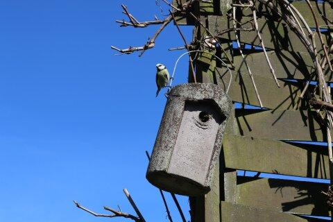 Ein Vogelhaus hängt an einem Zaun. An einem Draht sitzt eine kleine Meise.