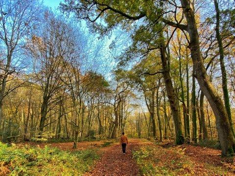 Ein Mann läuft über einen langen Weg im Wald. Die Blätter an den Bäumen sind orange.