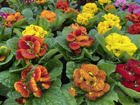 Rote und Gelbe Blumen stehen auf einem kleinen Tisch.