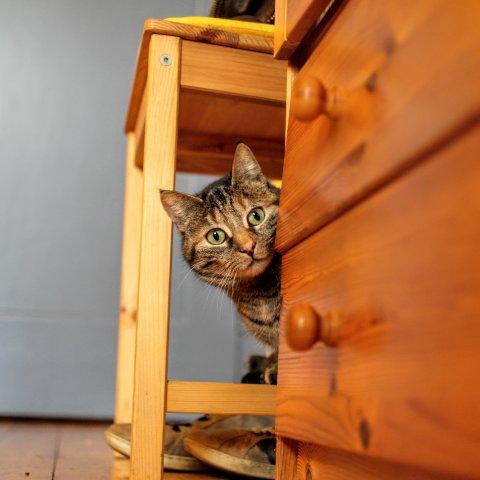 Ein Kätzchen schaut hinter einer Kommode hervor.