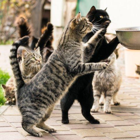 Mehreren Katzen wird Fressen hingestellt.