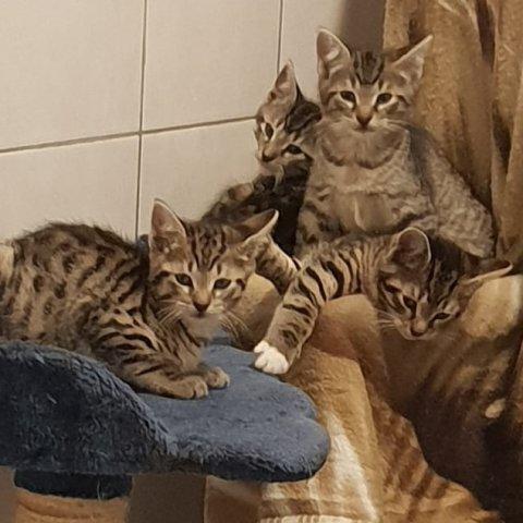 Vier kleine Kätzchen sitzen auf einem Kratzbaum.