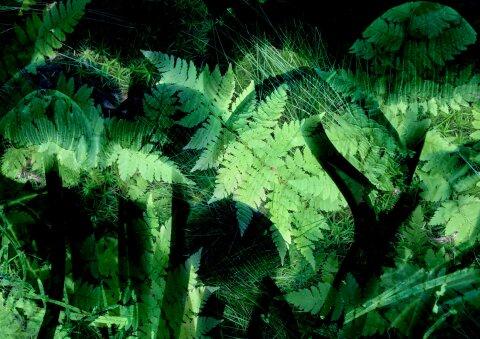 Verschiedene grüne Pflanzen und Gräser liegen übereinander.