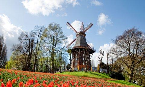 Tausende rote Tulpen vor der Mühle am Wall