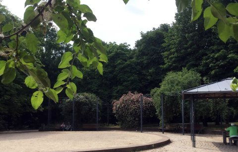 Eine große Rasenfläche zwischen alten Kastanienbäumen in den Neustadtswallanlagen
