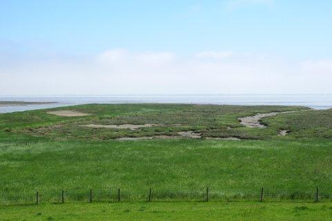 Blick auf grüne Salzwiesen, im Hintergrund die Nordsee.