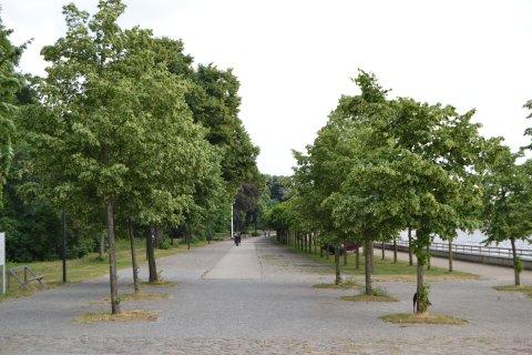 Rosengarten im Stadtgarten Vegesack