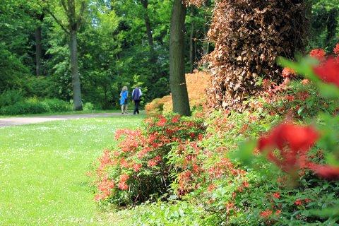 blühender Rhododendronpark Bremen