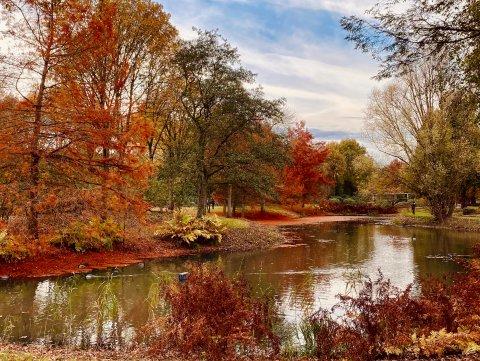 Herbstlich verfärbte Bäume rund um ein Gewässer im Rhododendronpark bei schönem Wetter