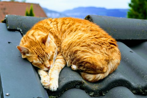 Katze schläft in der Sonne auf einem Dach