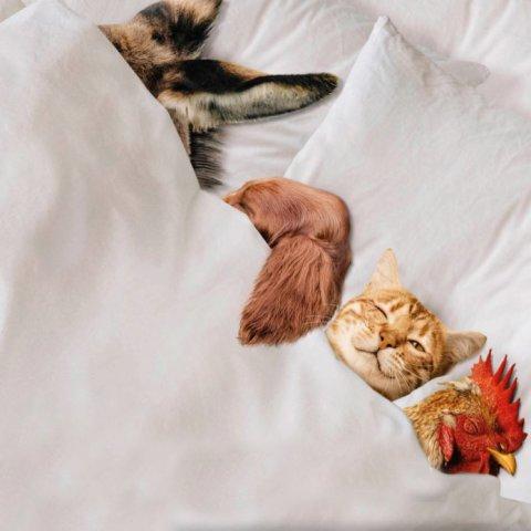 Die Ohren beziehungsweise der Kamm von Esel, Hund, Katze und Hahn gucken unter einen weißen Bettdecke hervor.
